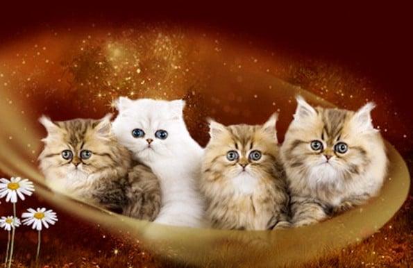 teacup kittens11