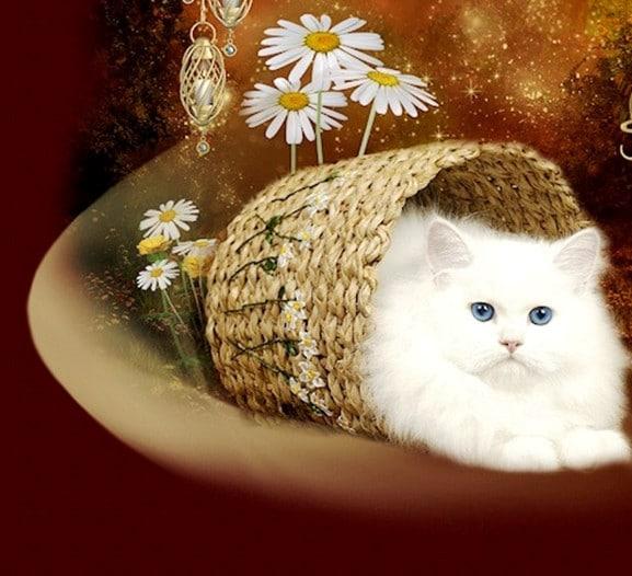 teacup kittens13