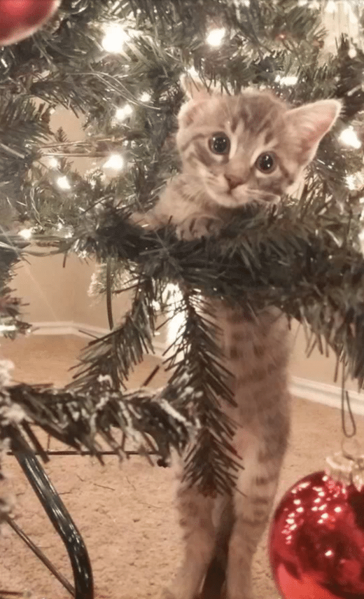 Adorable cats who are excited about Christmas Trees