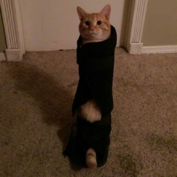 Cats who made Hilariously Poor Decisions
