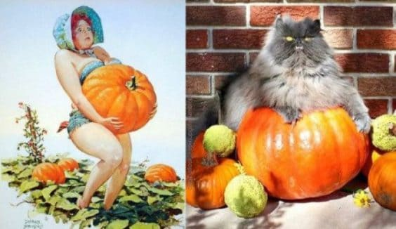 Cute Kittens Posing as Pin-up girls