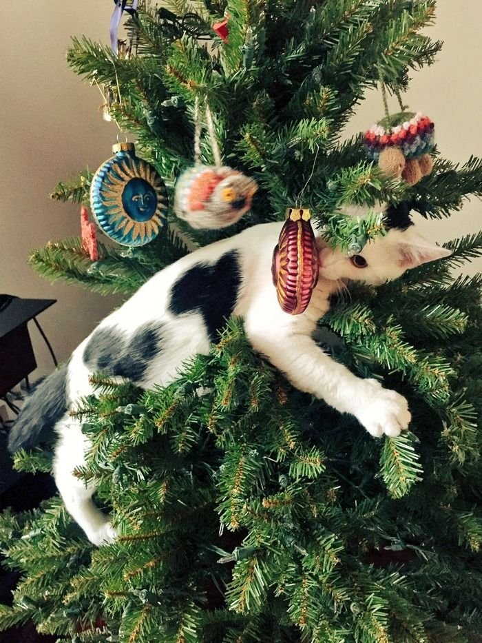 Source Cat And Christmas Tree