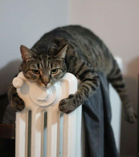 Cats that find comfort in finding warm spots