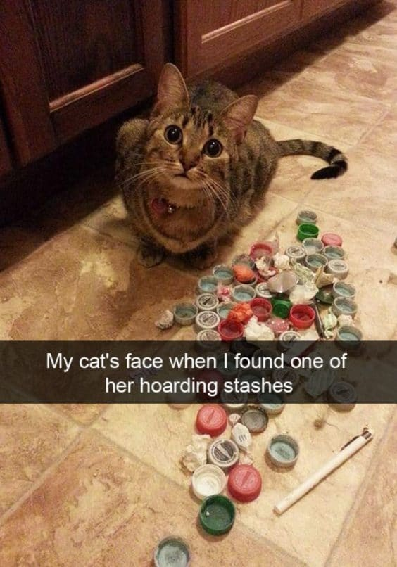 Hilarious Snapchats that all Cat Owners Can Relate to