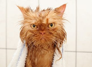 22 Hilarious pictures of Wet Cats